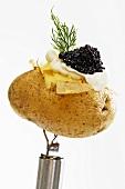 Potato with caviar, close-up