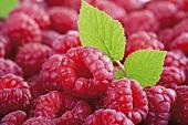 Fresh raspberries with leaf (close-up)