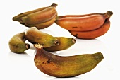 Red bananas (several bunches)