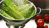 Washing romaine lettuce in a colander