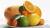 Verschiedene Zitrusfrüchte auf Teller