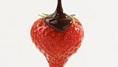 Eine Erdbeere mit Schokoladensauce begiessen