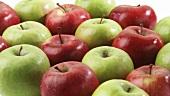 Rote und grüne Äpfel in Reihen