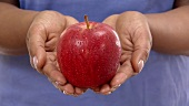Hands holding a red apple (close-up)