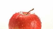 Ein Wassertropfen läuft einem Apfel runter
