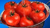 Tomaten in einem Sieb abwaschen