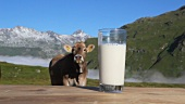 A glass of milk and a cow, mountains in background