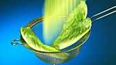 Romaine lettuce leaves falling into a sieve