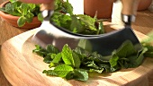 Chopping fresh mint leaves with a mezzaluna