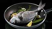 A sea bream in a frying pan