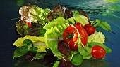 Gemischter Blattsalat mit Tomaten im Wasser
