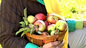 Person holding a basket of apples