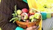 Person hält Korb mit Äpfeln