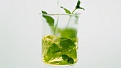 Pouring hot water onto mint leaves