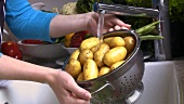 Washing potatoes in a colander under running water