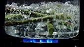 Spargelspitzen fallen in kochendes Wasser