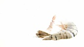 Prawn tails floating in water (white background)