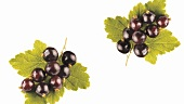 Blackcurrants with leaf