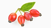Four rose hips
