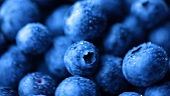 Freshly washed blueberries (macro zoom)