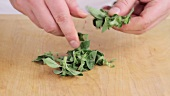 Picking oregano leaves from stems and chopping finely