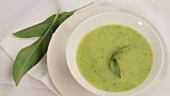 Cream of wild garlic soup
