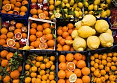 Assorted citrus fruit in boxes on market stall