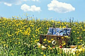 Picnic basket in meadow