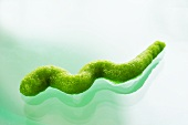 Squiggle of wasabi on glass