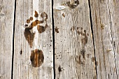 Wet footprints on wood