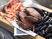 Mussels, crabs and shrimps in crate