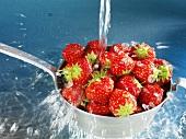 Washing strawberries in sieve