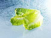 Romaine lettuce with water