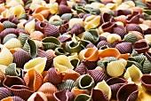 Coloured pasta shells