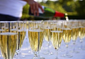 Glasses of champagne on a table at a garden party