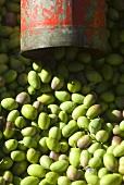 Many green olives