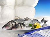 Two sea bass on a platter