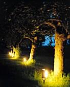 Beleuchteter Garten - Bodenlampen mit Erdspiess im Apfelgarten