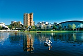 View of Torrens River and city in Adelaide, South Australia