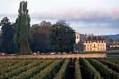 View of Biodynamic vineyard in Burgundy