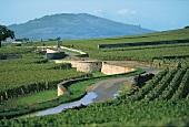 Burgund, biodynamischer Weinanbau, Weinlandschaft, Côte de Beaune