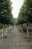 Paved path with trees at Sissinghurst Castle Garden