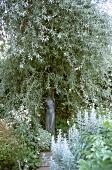Statue under tree at Sissinghurst Castle Garden