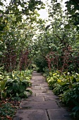 Overgrown paved pathway through garden