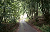 View of quite country road passing through the shady trees in forest, UK