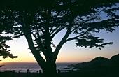 View of sunset at Ventana Wildlife Area near Pacific Coast, California, US
