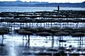 View of oyster bed in Sylt, Germany