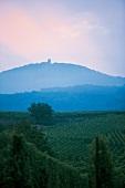 Elsass: Vorberge der Vogesen mit Reben der Route des Vins