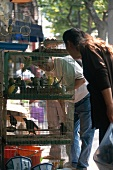 Man and woman looking at birds cage in Shanghai ornamental birds market