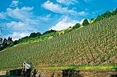 Ruwer: Weinlage Waldracher Heiligenhäuschen